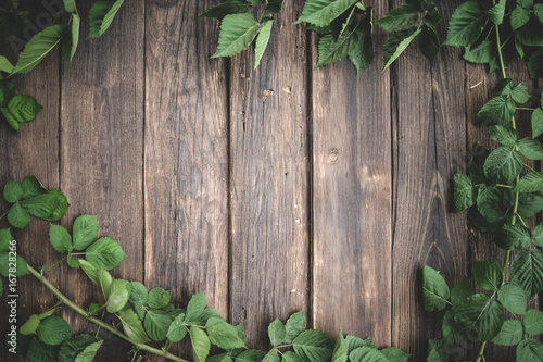 Green Ivy background around old wood