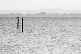 Two seagulls on poles on a lake, with distant hills in the background and very soft tones - 167831863
