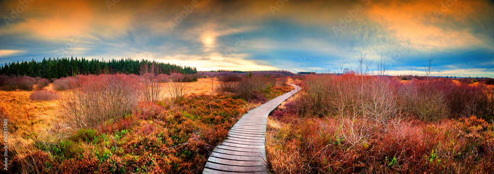 Panoramic autumn landscape with wooden path. Fall nature background