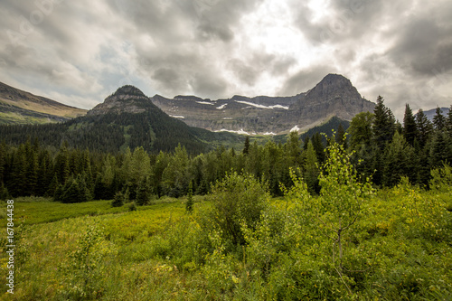 mountain and forest meadow view