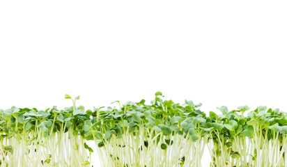 Panel Szklany Portion of Cress isolated on white