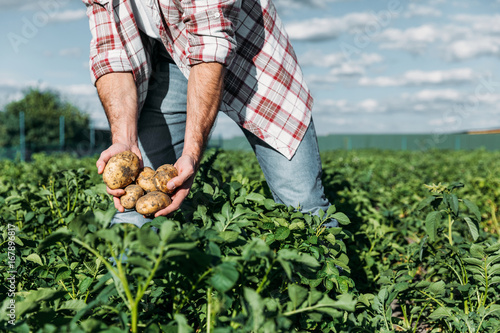 farmer holding potatoes in field Fototapeta