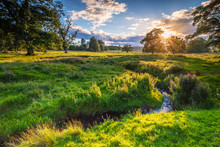 River Aln Under Golden Light /...