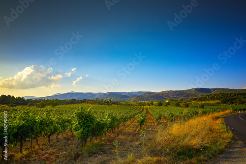 Fotografia  South of France Vineyards