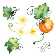 Watercolor Pumpkin, Isolated Elements
