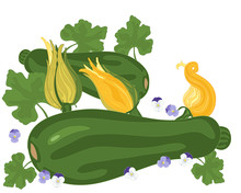 Courgette And Flower