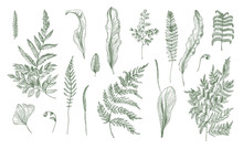 Fern Realistic Collection. Hand Drawn Sprouts, Frond, Leaves And Stems Set. Black And White Vector Illustration.