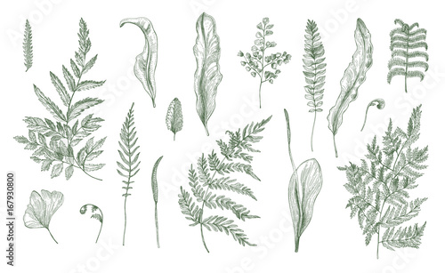 Leinwand Poster Fern realistic collection