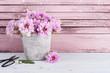 Pink chrysanthemum in concrete pot with scissors