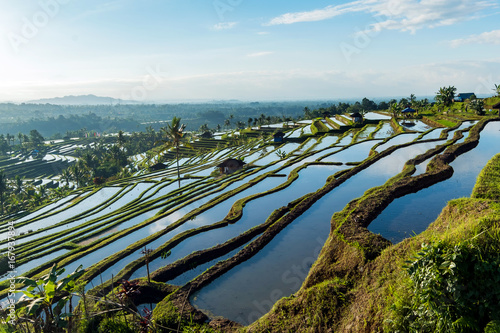Garden Poster Rice fields Bali Rice Terraces. The beautiful and dramatic rice fields of Jatiluwih in southeast Bali have been designated the prestigious UNESCO world heritage site.