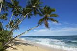 Fototapeta Forest - Beach, Mirissa, Sri Lanka