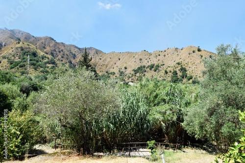 Foto op Plexiglas Olijf landscape