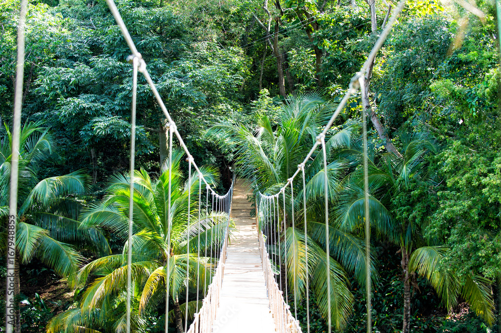 Fototapeta Jungle rope bridge hanging in rainforest of Honduras