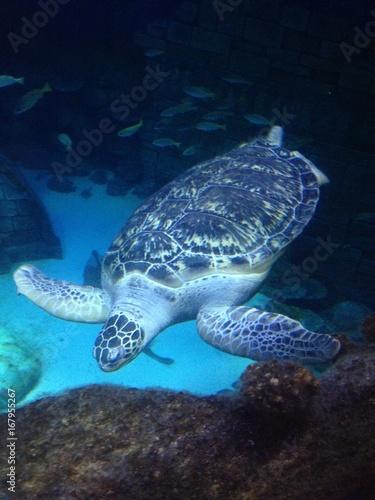 Fototapeta underwater obraz na płótnie