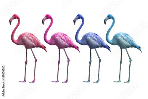 Foto op Aluminium Flamingo colorful of flamingo isolated on white background