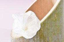 白朝顔と竹
