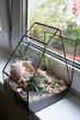 Florarium with seashells