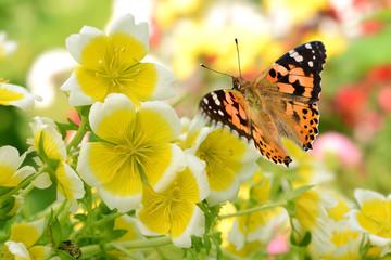 Obraz na Plexi Schmetterling 287