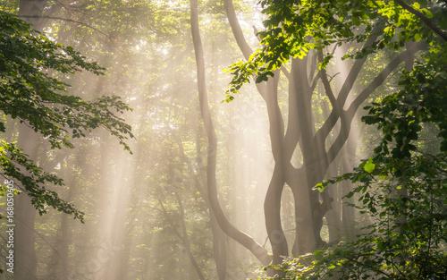 ranku-slonca-promienie-w-lesie