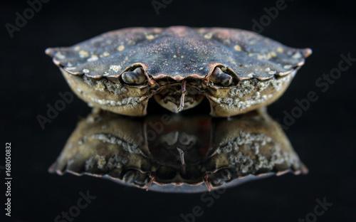 Foto op Plexiglas Krokodil The Crab shell