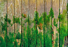 Old Wooden Fence With Green Moss