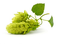 Hop Cones Isolated On The Whit...