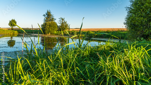 Foto op Aluminium Blauw Summer landscape. View from the coast through the reeds to a small swampy lake in the middle of an agricultural field