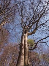 Zwei Bäume Sind Zusammen Gewa...