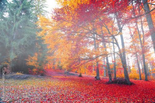 Deurstickers Herfst Autumn foggy forest