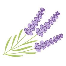 Vector Lavender Bunch