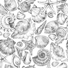 Hand Painted Seashells Pattern...
