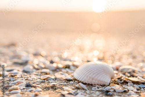 Fotografie, Obraz  Sea shell on beach in the sunrise