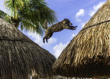 Coati Jumping Between Straw Ro...