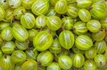 Fresh And Green Gooseberries B...