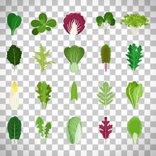 Green Salad Leaves On Transpar...