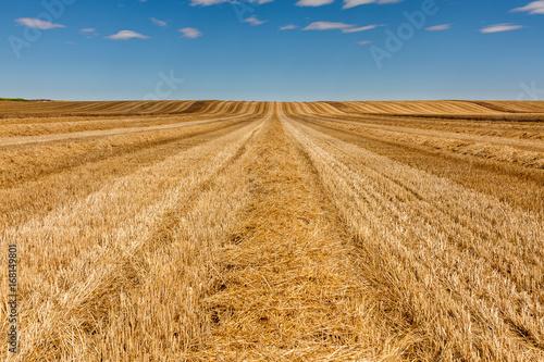 Fotografie, Obraz  Campo de trigo cosechado. León, España.