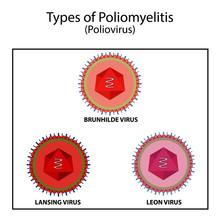 Types Of Poliovirus. The Brunnhild Virus. Virus Lansing. The Virus Leon. Infographics. Vector Illustration On Isolated Background
