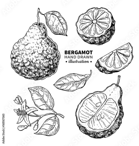 Bergamot vector drawing Wallpaper Mural