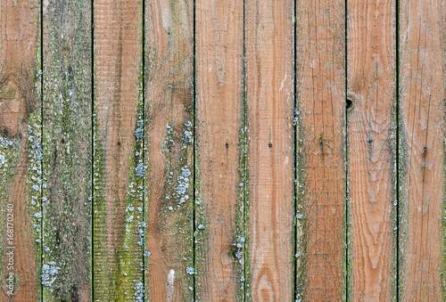 Old Wooden Weathered Planks With Green Mold On It