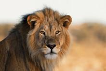 Portrait Of A King