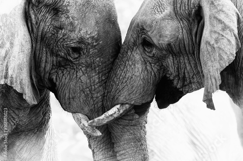 Photo  Elephant Touch