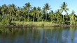 Palmtrees next to a pond in Anda Bohol the Philippines