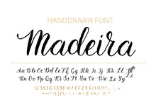 Handdrawn Vector Script Font. ...
