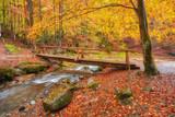 Autumn landscape - wooden bridge in the autumn park