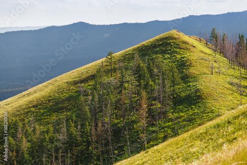 Foto op Plexiglas Heuvel Idyllic summer scenic landscape with fresh green grass