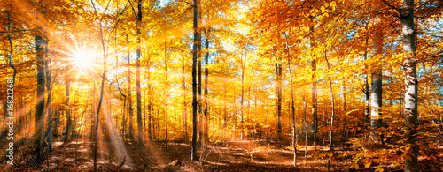Photo sur Aluminium Orange Wald Panorama im goldenen Herbst
