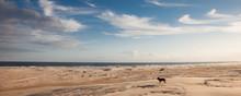 German Shepherd Dog Walking On...