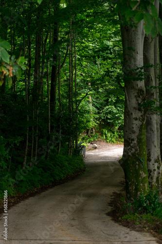 Foto auf Acrylglas Wald im Nebel The Way in Forest