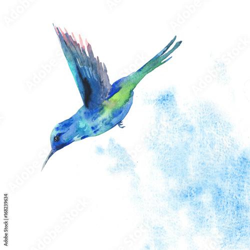 pikujacy-niebieski-ptak