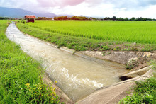 Irrigation Water Canal For Pad...
